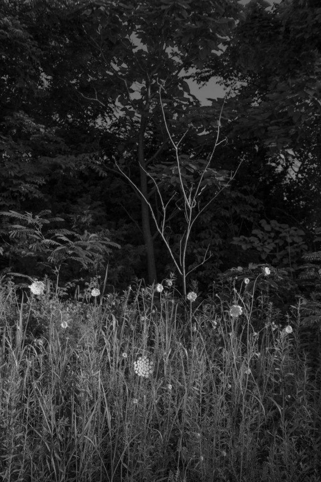 Weeds with Tree